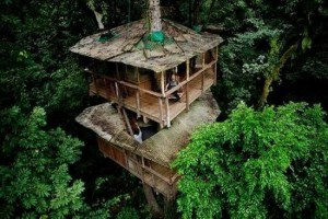 Tree_Houses_14